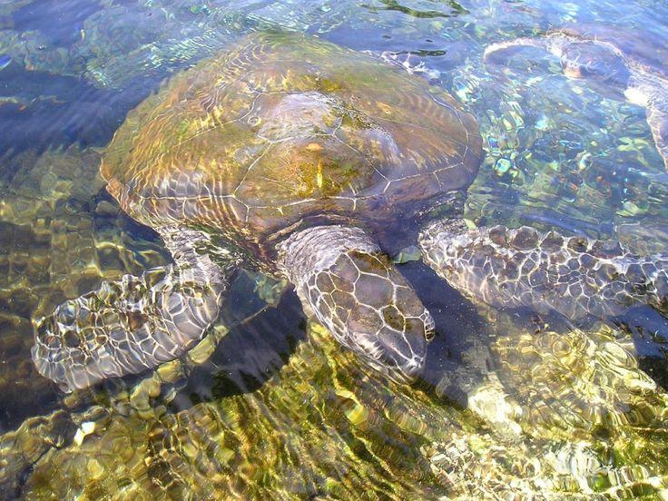 Amfibi Amfibi adalah hewan yang tidak memiliki rambut/bulu/sisik. Mereka hidup di darat atau di air. Kulit mereka basah/lembab dan biasanya …