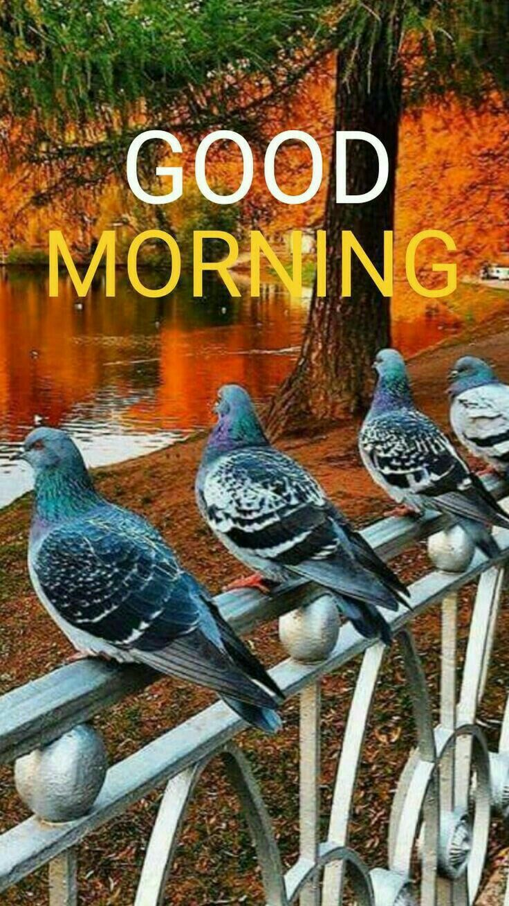 Good Morning Sister Happy Thursday Good Morning Nature Good Morning Sister Morning Pictures