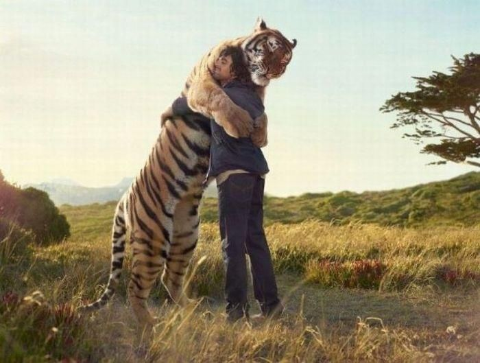 If you believe it then everything is possible <3 Seriously, THERE ARE NO WORDS. I would cry like a hungry/tired/indecisive baby if I ever had the opportunity to do this. If I'm in the wild one day, and come across a tiger, I won't be scared... I'll approach that beast and we'll hug and play like no other, I believe. ;)