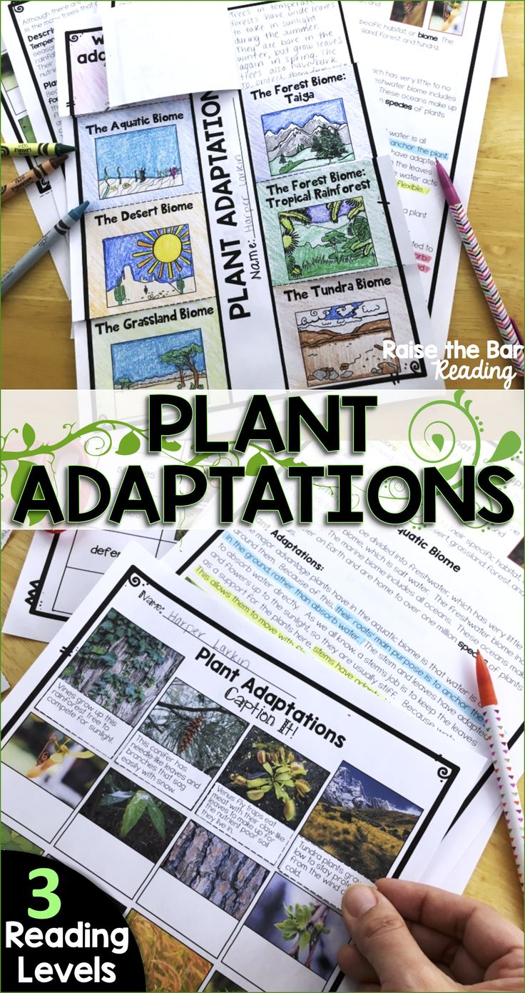 Engage your students with fascinating plant adaptations for the major biomes! These plant adaptations reading passages and activities are a great way to get your students engaged in either your plants unit or biomes unit! Easily differentiate with 3 reading levels!