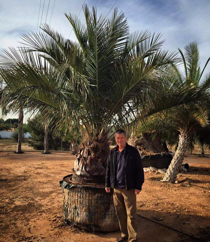 The ever graceful Jubaea chilensis (Chilean Wine Palm). A fantastic palm and very hardy, great for making wine!