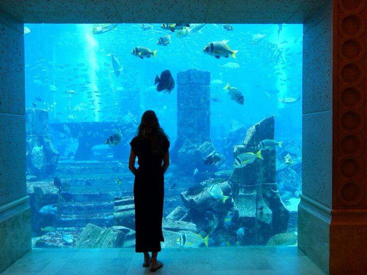 Hotel Atlantis aquarium