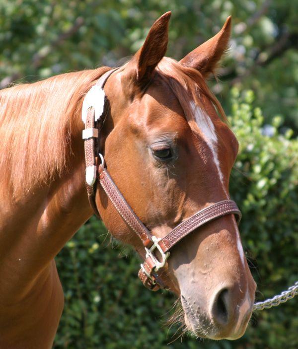 Oak Apple Pie.......... reining mare