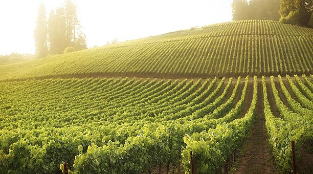 Eger wine region