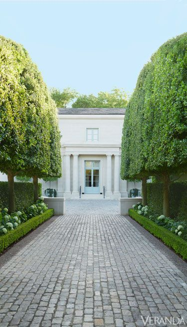 Pleached live oaks line this driveway in Texas.
