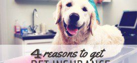 4 Reasons the Cost of Pet Insurance is Worth It