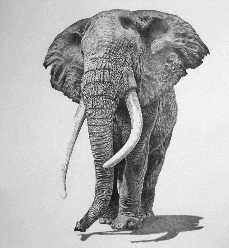 The use of accurate shading and line hatchings produced the correct skin/texture an elephant would normally have.