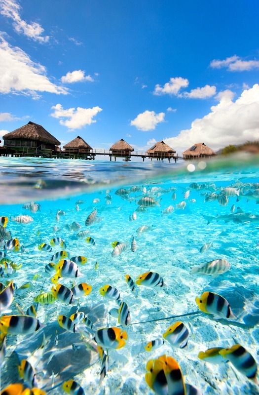 How to travel to Tahiti... solo.