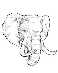 how to draw a real elephant - Google Search