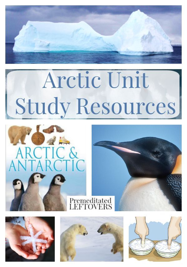 Arctic Unit Study Resources- These resources include learning materials on the Arctic and Inuit people. You will find educational videos, crafts, and more