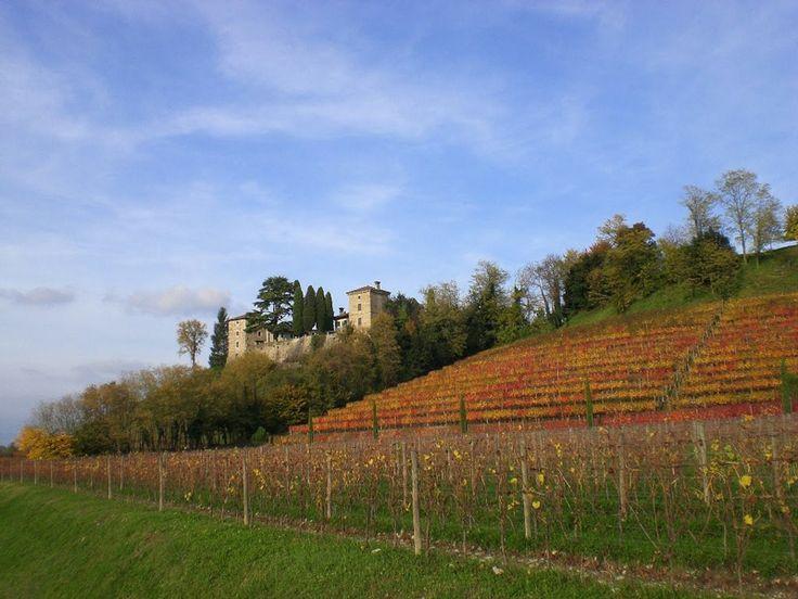 Dolegna del Collio: circondata da  colline dove prosperano le viti