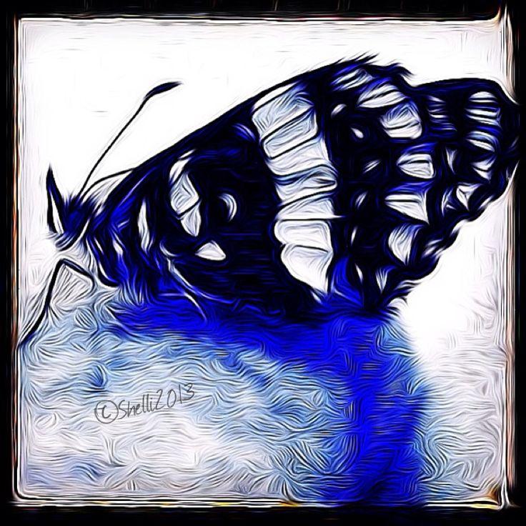 """Black and Bluetiful"" digital art by Shelli Fitzpatrick"