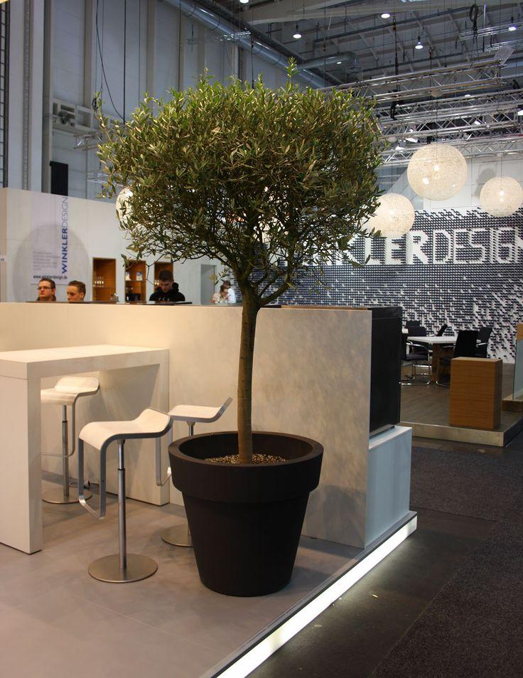 Olivenbaum, Messestand Hamburg - olive tree, decoration for fair