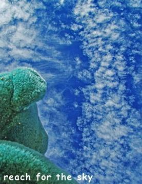 Reach for the Sky  http://www.cafepress.com/bluebearlovesu.324347999