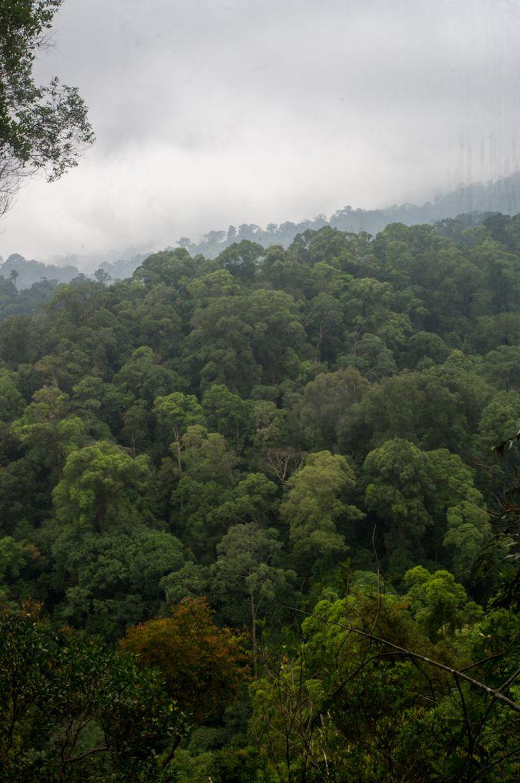 Gunung Leuser National Park, Sumatra, Indonesia