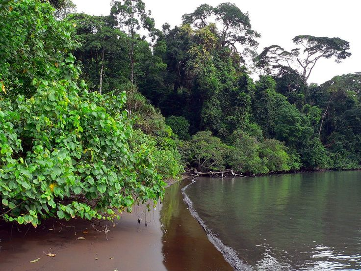 Limbe, cameroon, where Lizerd is from and famous for its black sand beaches and also close to Mt. Cameroon national park