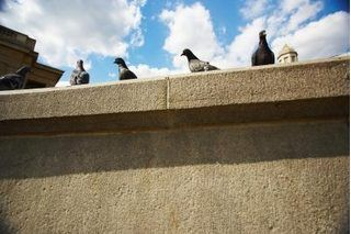 Home Remedies: How to Get Rid of Pigeons (with Pictures) | eHow