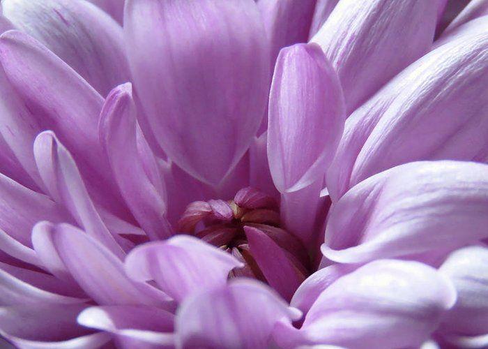 Adorable pink. #flowerart #greetingcard #crysanthemum