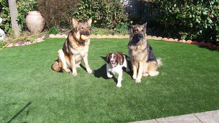 Relva Sintética - Relva Artificial pode ser usada por animais (cães, gatos), sem danificar o relvado.