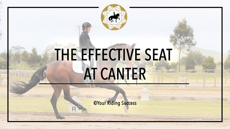 Ultimate Seat Package | DMA | Your Riding Success