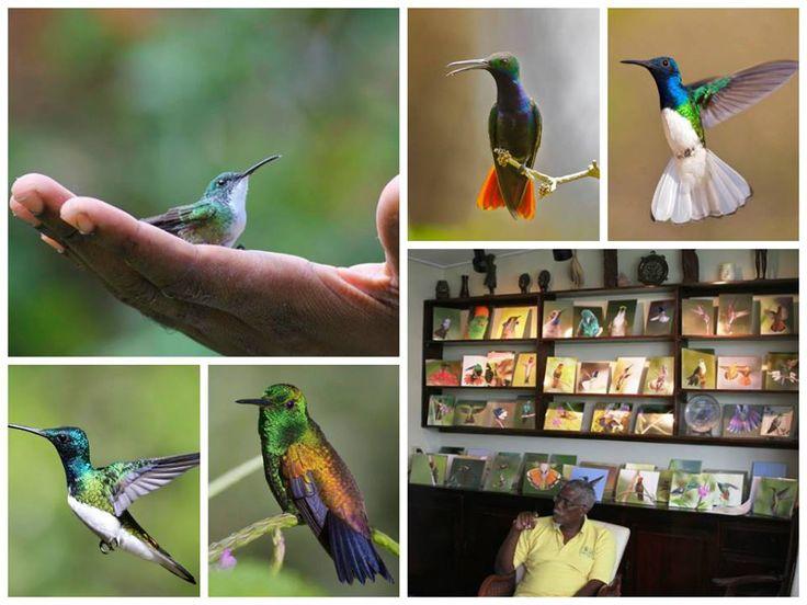 Yerette, the home of the Hummingbird