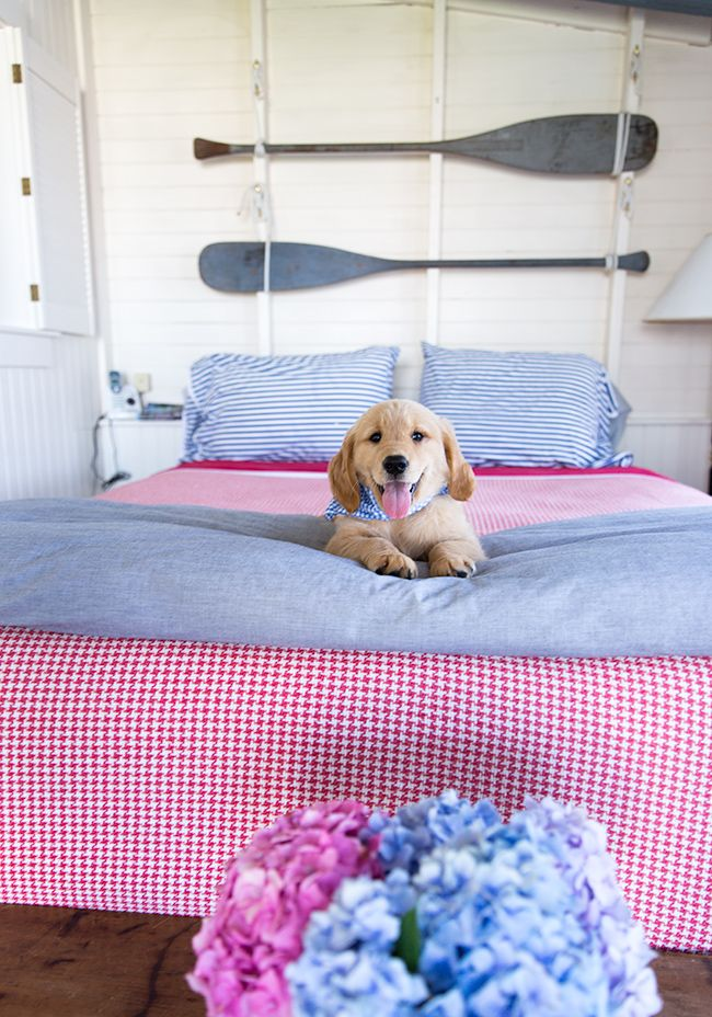 Classy Girls Wear Pearls: There Once Was A Pup On Nantucket