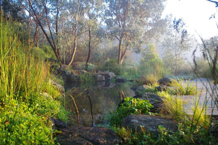 1168 best images about australian native gardens on for Rural australian gardens