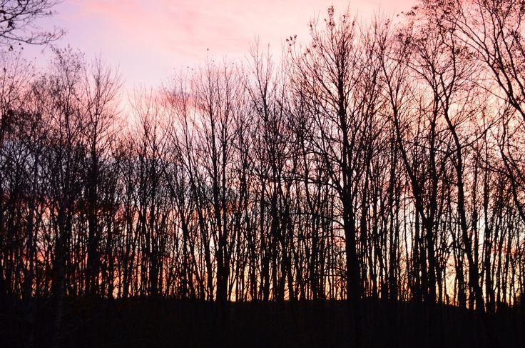Birchwood 2017 sunrise