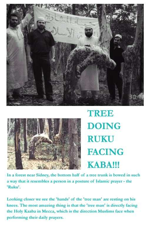 MashaAllah!!!! Ruku in the direction of the Ka'bah from a tree.