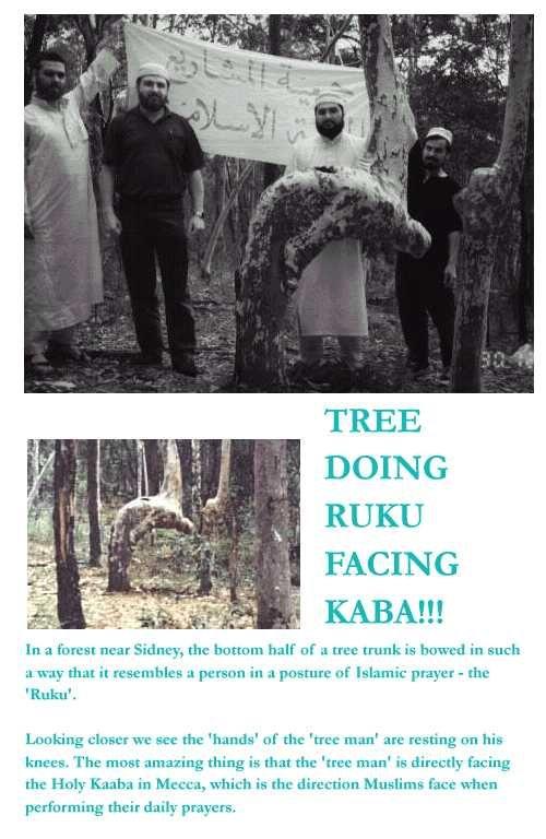 Subhannalah a tree doing ruku facing kaaba, near sydney australia<3 subahanallah