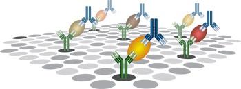 PathScan® Antibody Arrayキットは、サンドイッチELISAの原理に基づいたスライドベースの抗体アレイです。重要なシグナル伝達を網羅的に分析することができます。    キットはスライド2枚を含みます。さらに、各スライドには複数の抗体がスポットされたアレイがあり、キャプチャーしたタンパク質を検出抗体カクテルで検出します。ポジティブとネガティブコントロールも各アレイに含まれています。    化学発光キットと蛍光検出キットをご用意しております。化学発光アレイはフィルムで検出できるので、他の機器は必要ありません。蛍光での読み取りは、蛍光イメージャーで行えます。