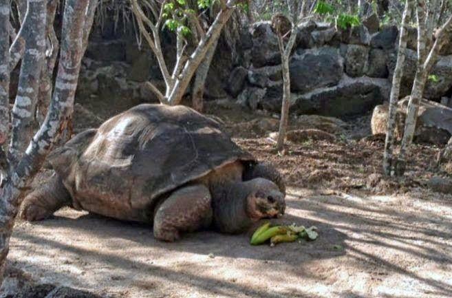 """SandRamirez contra el maltrato animal. • www.luchandoporellos.es: LA TORTUGA GIGANTE """"PEPE"""" MUERE A LOS CIEN AÑOS."""