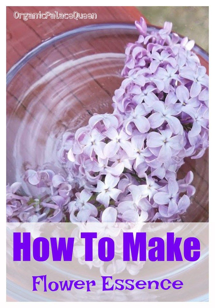 How To Make Flower Essences Organic Palace Queen Flower Essences Flower Essences Remedies Flower Remedy