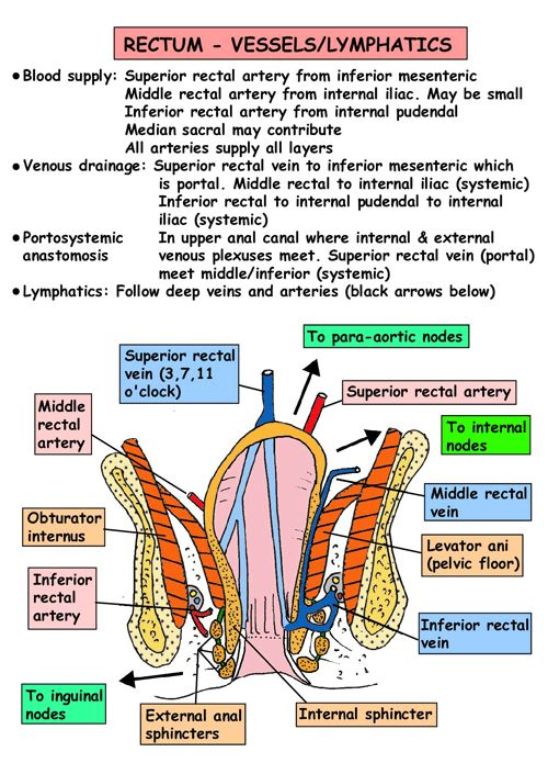 Instant Anatomy - Abdomen - Vessels - Arteries - Rectum