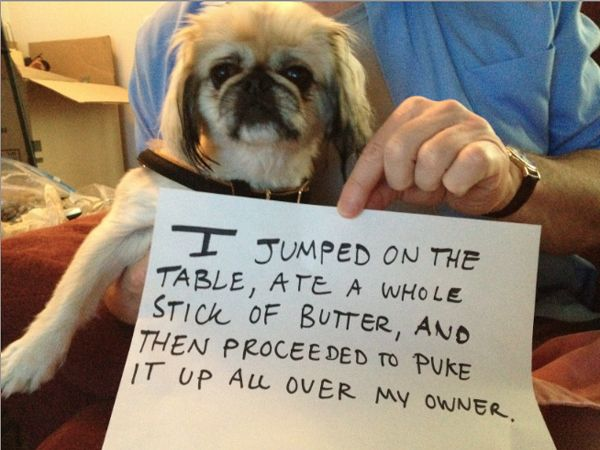 Dog-Shaming Tumblr Lets Mischievous Pups Have It | Dogster