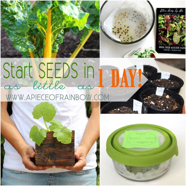 Start seeds fast and easy way | A Piece of Rainbow