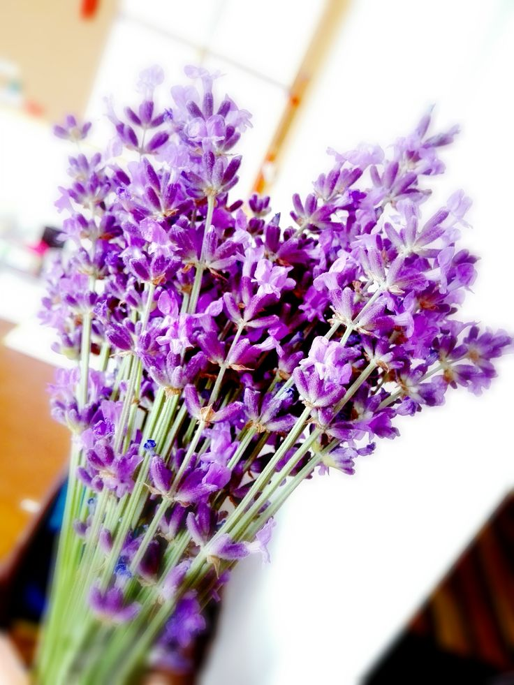 A műhelyünk előtt szedtük... Jól mutat az irodában :-) #levendula #lavender #love2smile #workshop #muhely
