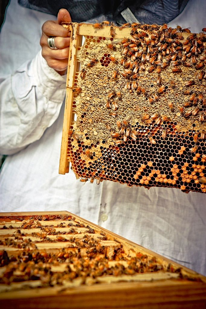 Are flow hives a good thing? According to this very interesting article, they may not be. Great read! So much controversy about the subject.