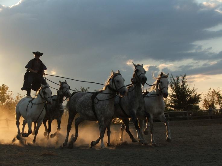 Hungarian Cowboys - Magyar Csikos