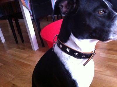 Collare di Pelle per Cani http://www.principini.it/prodotti/cani/collari-e-guinzagli-per-cani/collare-di-pelle-per-cani