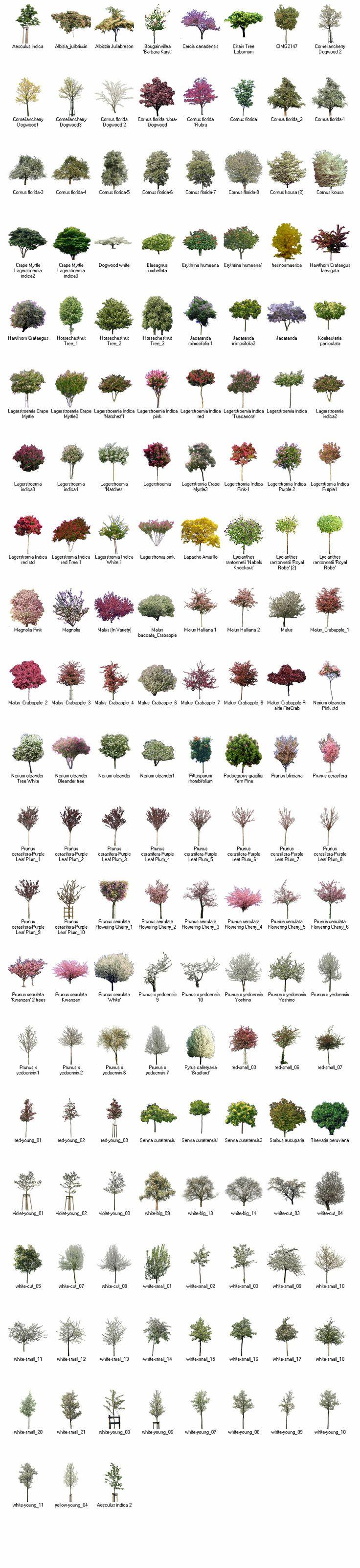 best 25 landscaping software ideas on pinterest free landscape flowering trees for landscape design using greenscapes landscape design imaging software learn more http