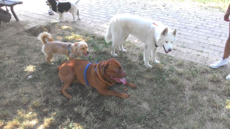 14/07/2015 - Torino con Billo, Ricky e Temi