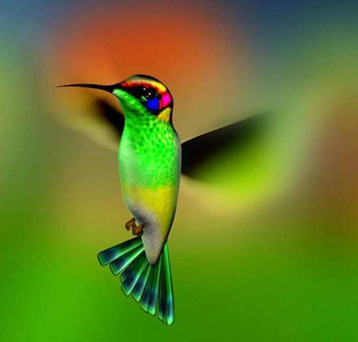 Exquisite colors - The humming bird and all other animals but the human simply BE themself. Authentic Acceptance can help you walk toward an 'Aware Innocense                                                                                                                                                     Plus