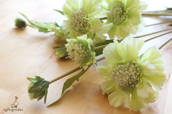 "Apple Green Scabiosa Each stem measures approx. 21"" in length. Each stem has 2 flowers and 1 bud. Each flower measures approx. 1 1/2"" – 3"" wide and each bud measures approx. 1/2"" wide. The listing is for ONE stem. Available in four colors:  1. Light Purple 2. Purple 3. Apple Green 4. White  ** This scabiosa can be ordered WITH or WITHOUT the stem.  {Perfect for} - bridal bouquet, corsage, boutonniere, headpiece and wedding crown - gift packaging - wedding, anniversary, birthday, par..."
