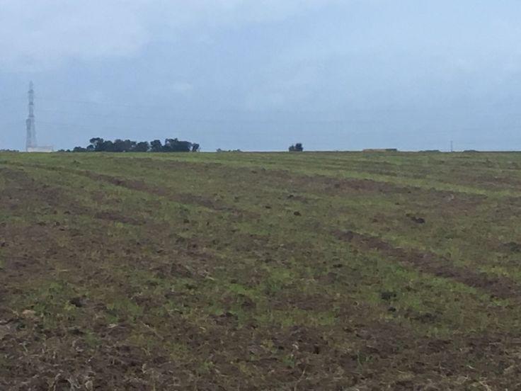 Un Terrain agricole de 138 hectares à Mohammedia. Prix : 350000dh/hectare 35 Millions/hectare