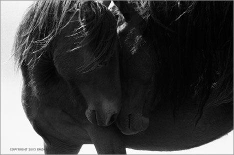 Robert Dutesco - Chasing Wild Horses  Sable Island