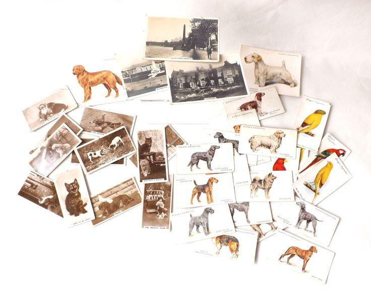 Mixed Lot of 36 Vintage Cigarette Cards De Reszke Real Photographs Humorous Cats & Dogs, John Players, Senior Service by CuriosAnCollectibles on Etsy