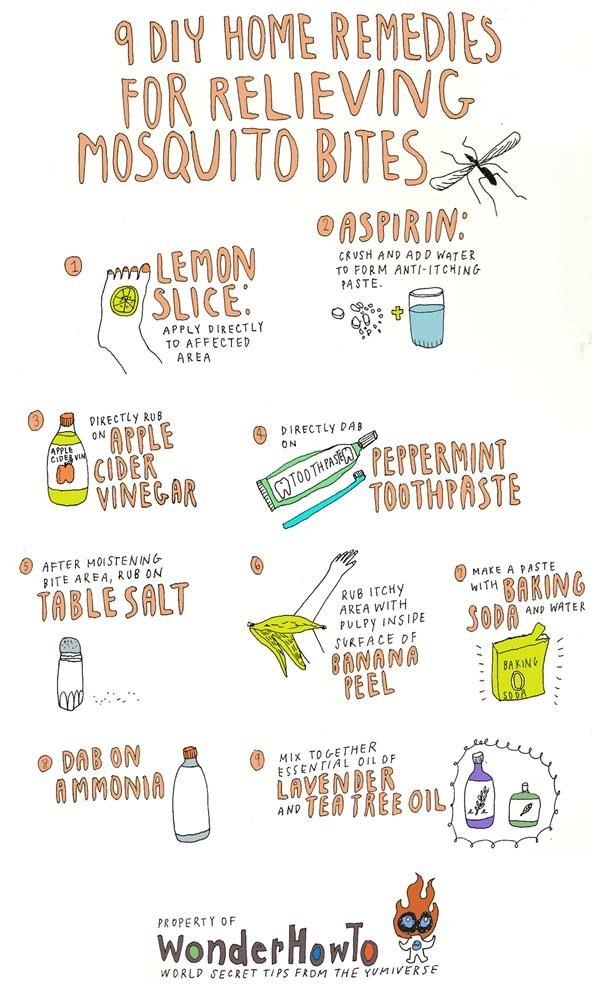 9 DIY Home Remedies for Relieving Itchy Mosquito Bites « The Secret Yumiverse