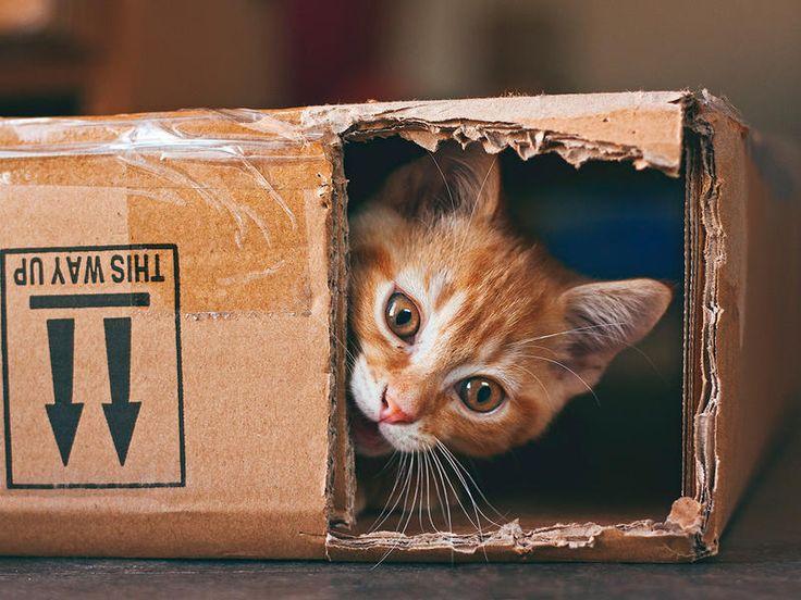 ¡Que no me vea nadie! #Gatos