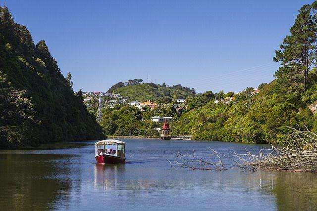 Zealandia - Karori Wildlife Sanctuary - Wellington | © Elyse Childs Photography